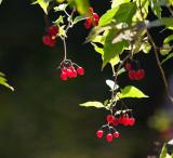 1117 berries.jpg