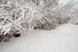 1714 Snow Dec 22 2015.jpg