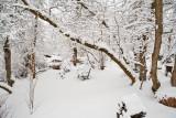 1718 Snow Dec 22 2015.jpg