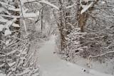 1728 Snow Dec 22 2015.jpg