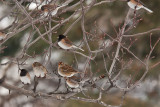 1792 small birds on tree.jpg