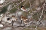 1792 small birds on tree A.jpg