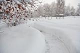 1962 Snow Jan 31  2016.jpg