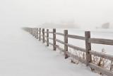 2029 foggy fence