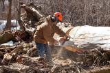 2103 Cutting cottonwood.jpg