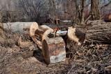 2108 Cutting cottonwood.jpg