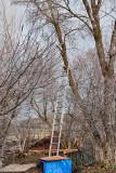 2111 Tree trim.jpg