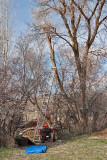 2113 Tree trim.jpg