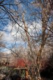 2114 Tree trim.jpg