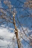 2115 Tree trim.jpg