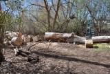 2186 splitting wood.jpg