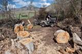 2191 splitting wood.jpg