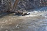 2242 Raging waters 4 16 16.jpg