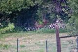 2605 Bambi.jpg