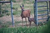 2607 Bambi.jpg
