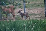 2608 Bambi.jpg