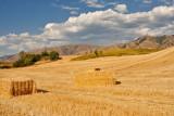 2781 Golden Hay.jpg