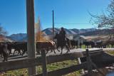 3102 Cattle drive.jpg