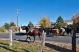 3103 Cattle drive.jpg