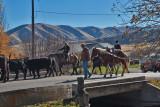 3106 Cattle drive.jpg