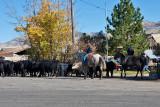 3107 Cattle drive.jpg