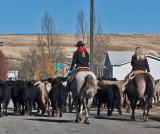 3108 Cattle drive.jpg