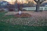 3114 kids in leaves.jpg