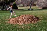 3147 kids in leaves.jpg