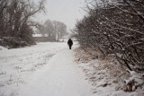 3187 Jackie walking snow.jpg