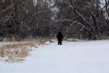 3191 Jackie walking snow.jpg