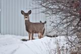 3219 deer.jpg