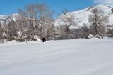 3223 Jackie walking snow.jpg