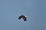 3276 Eagle.jpg