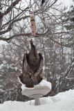 3288 Turkeys.jpg