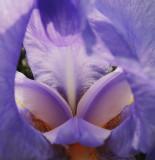 The Iris mask