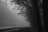 A foggy winter day