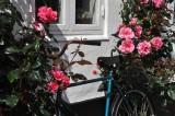 Beauty and the bike