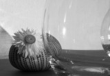 Flower, glass, and shadows