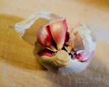 Jan 30: Garlic