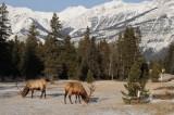 Large wildlife - mountain and prairie