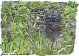 20130624 373 Beaver 1r1.jpg