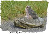 20130706 199 Northern Map Turtle & Friend.jpg