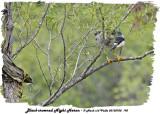 20130708 195 SERIES -  Black-crowned Night Heron.jpg