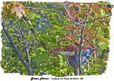 20130723 382 SERIES - Green Heron.jpg