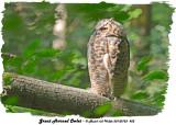 20130723 452 SERIES - Great Horned Owlet .jpg