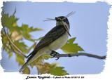 20130718 229  SERIES - Kingbirds & Dragonflies.jpg