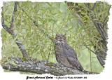 20130809 585 Great horned Owlet.jpg
