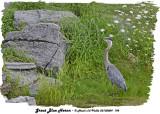 20130809 198 SERIES - Great Blue Heron.jpg