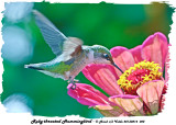 20130814 022 Ruby-throated hummingbird.jpg