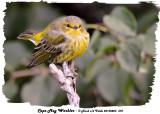 20130823 370 Cape May Warbler.jpg